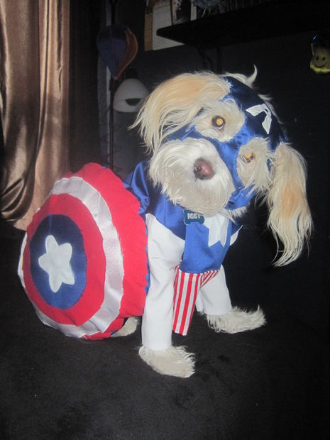 Captain Dogamerica